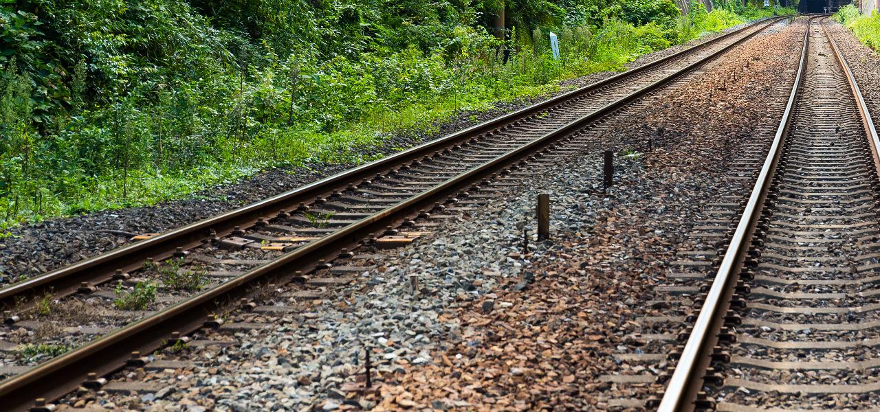 Dorf Mecklenburg: Rinder am Gleis verursachen Zugverspätung